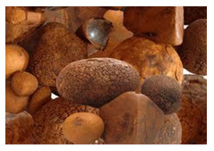 ox cow gallstones for sale in bulk