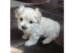 puppy for re homing