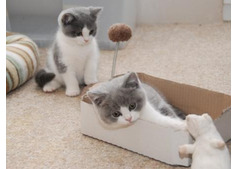 Friendly Male and Female  Kittens for Rehoming