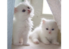 Adorable kittens looking for a good and caring home.