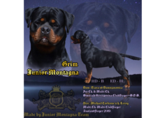 Rottweiler Young Male Champion Line IMPORT